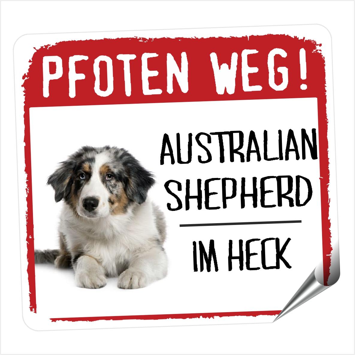 Australian Shepherd 4 Pfoten Weg